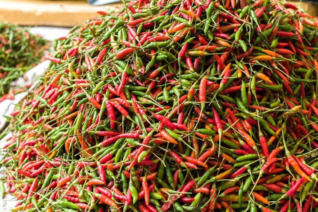 Pimenta vermelha e pimenta verde de Laos