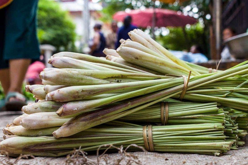 Capim Limão ingrediente essencial na Culinária de Laos