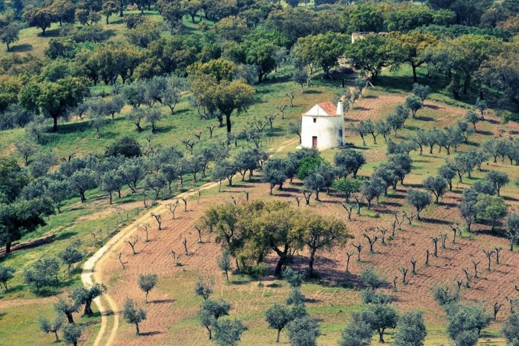 olive trees in Castelo de Vide city in the North Alentejo