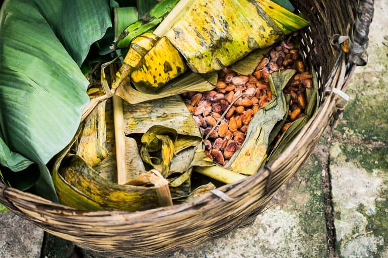 Banana leaf used to cover cocoa beans during fermentation