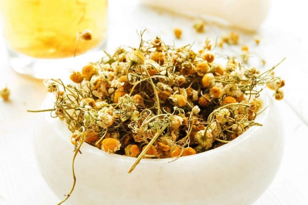 chamomile for making an infusion