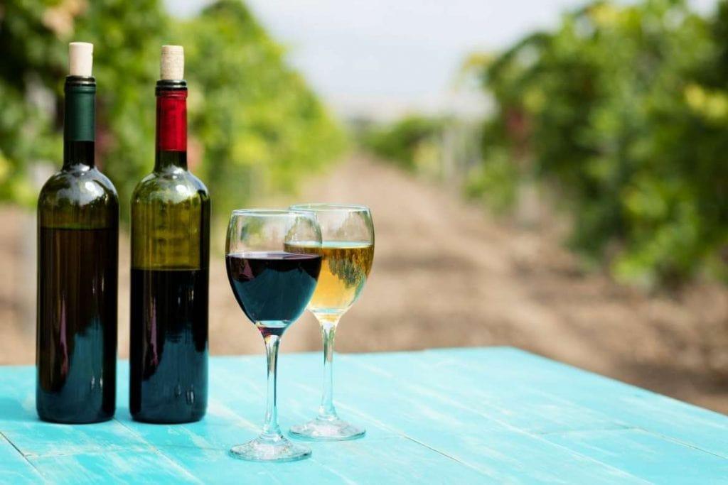 sessão de degustação diretamente nos vinhedos como atividade de tour de vinho no enoturismo