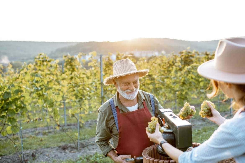 aprender a fazer o vinho com o produtor de vinho nos vinhedos como parte da experiencia de tour do vinho uma atividade do enoturismo