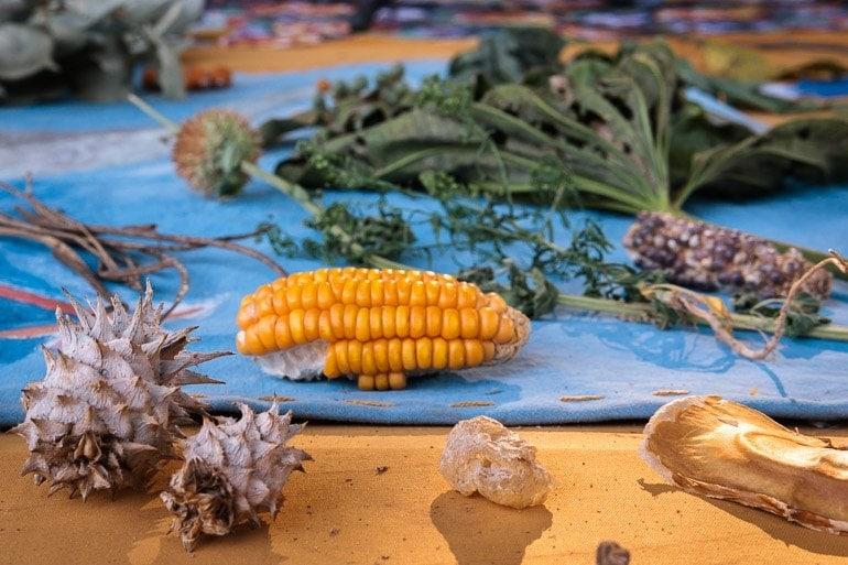 Some of the plants from cerrado bioma harvested for the Taste of Cerrado workshop at Natureza do Sabor Event