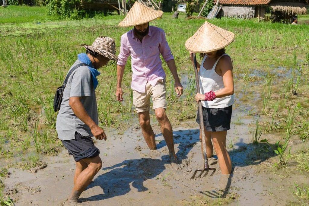 turismo gastronômico em campos de arroz na ilha de Bali durante uma viagem na Indonésia