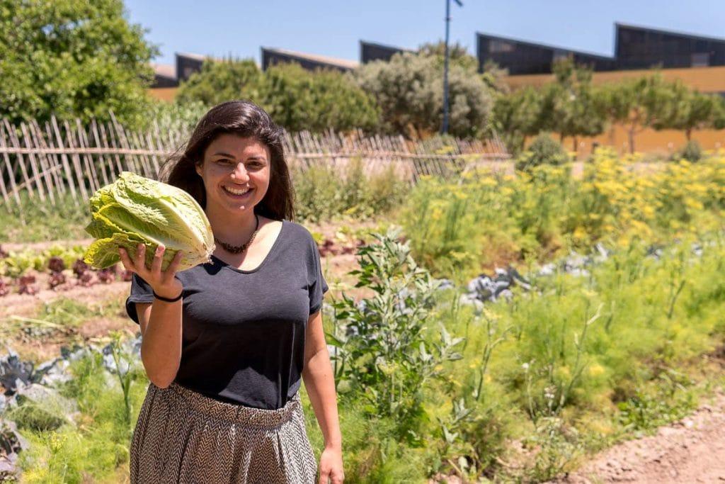 colheita de alface durante um passeio pelos jardins rurais espanhóis em Valência como parte do turismo gastronômico