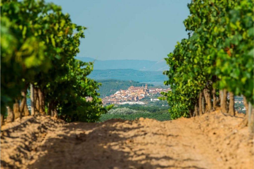 vinhedos em La Rioja com a cidade no fundo um ponto turístico de enoturismo famoso no mundo