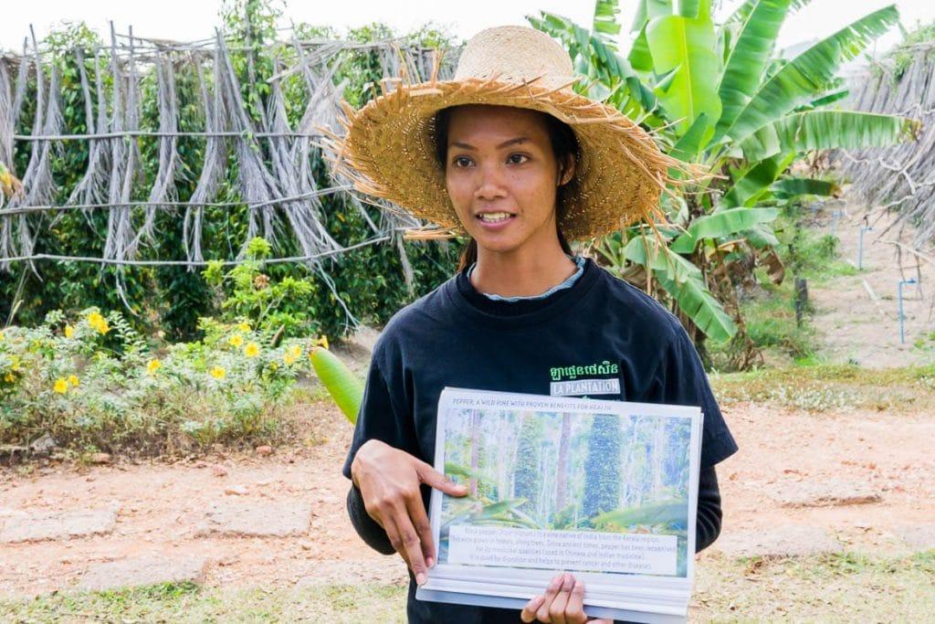 um tour gastronômico rural em uma plantação de pimenta-do-reino no Camboja