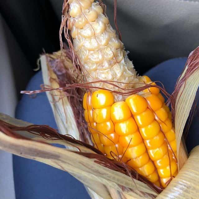 red corn local known as Jagung Merah
