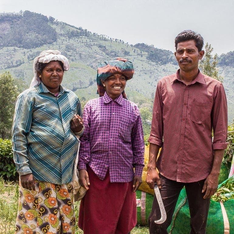 trabalhadores rurais em plantação de chá na Índia