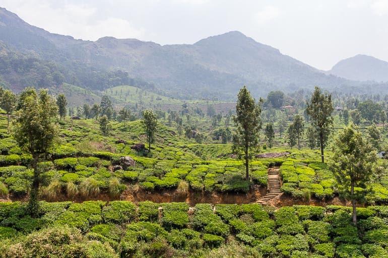 região de cultivo de chá da Índia