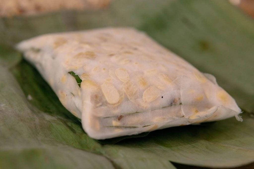 tempeh na fase de fermentação