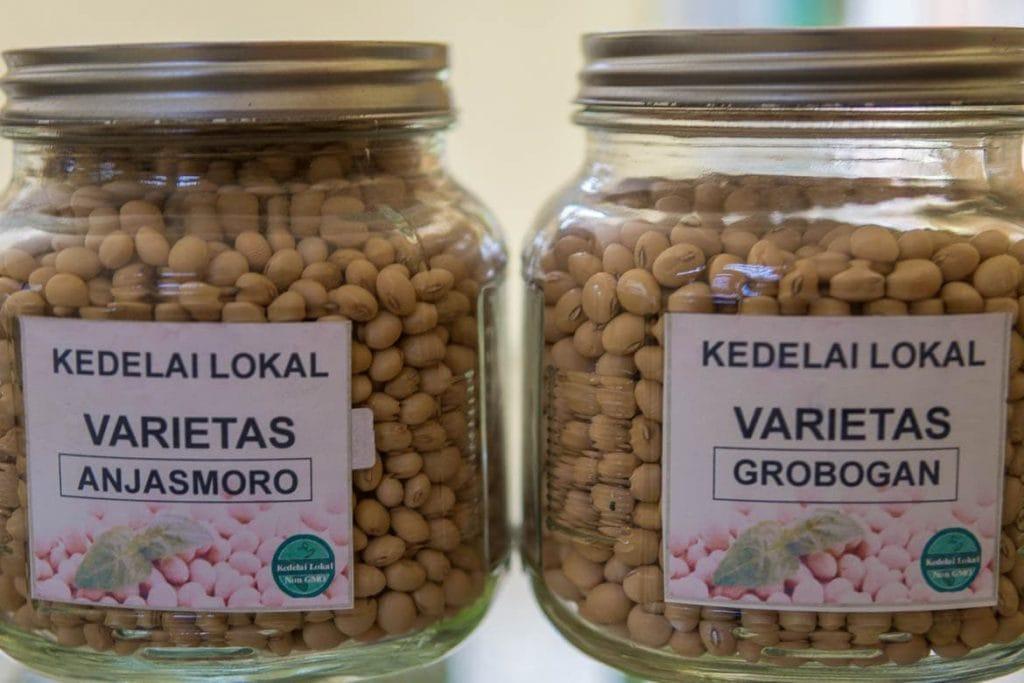 soja anjasmoro e grobogan usada para produção de tempeh na Indonésia