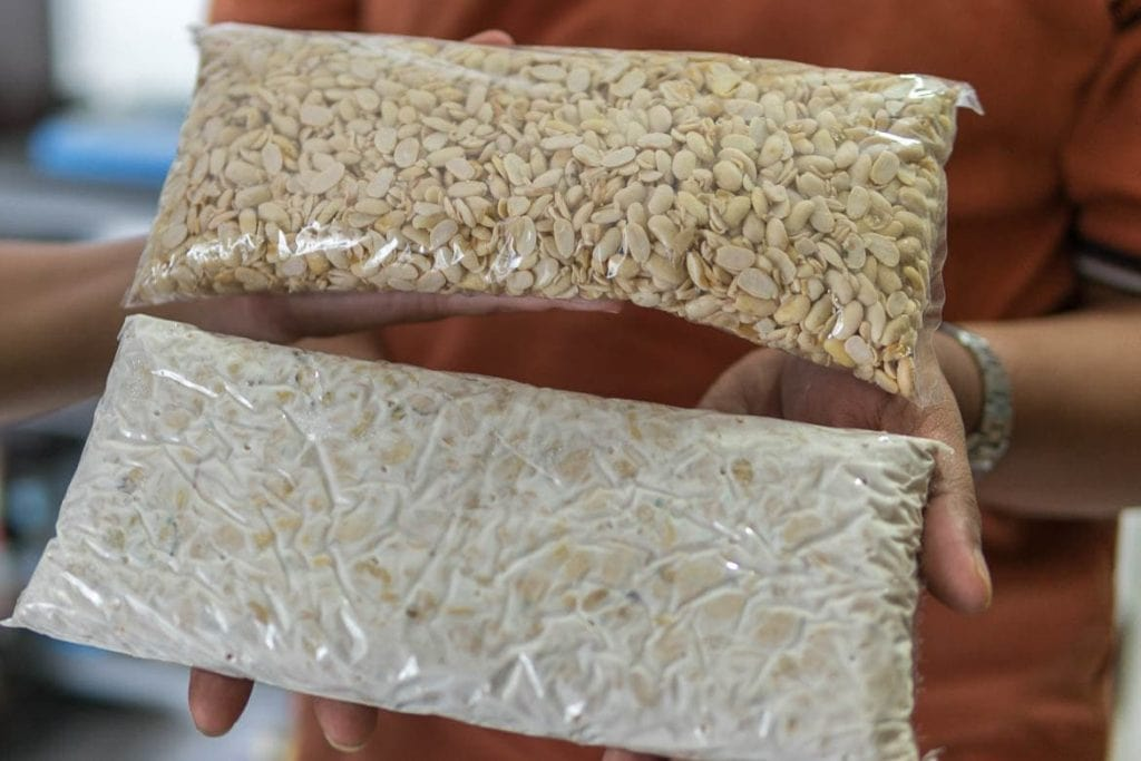 tempeh na fase inicial e final de fermentação