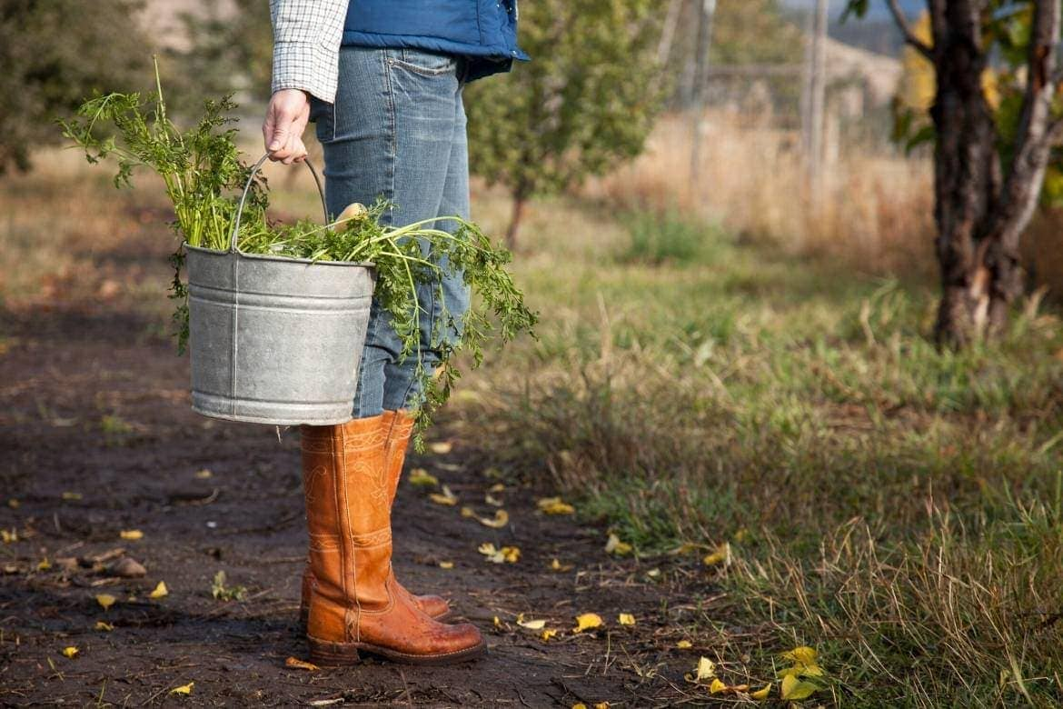 Lower body of a woman in a farm with a bucket full of harvested vegetables, agritourism in a farm stay
