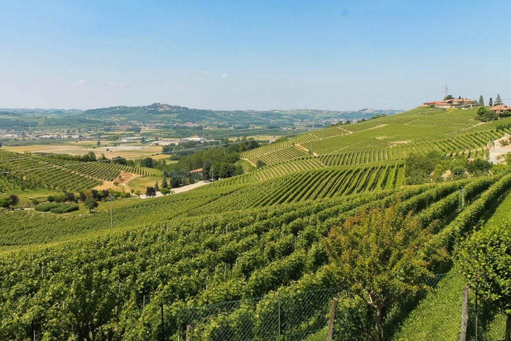 vineyards in Barbaresco and Barolo region of Langhe in the Piedmont very famous for wine tourism in Italy and in the world