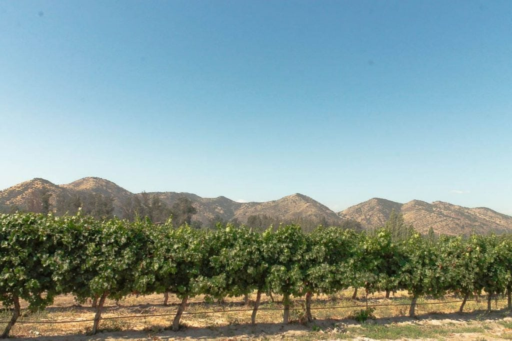 vineyards in the Casablanca Valley in Chile