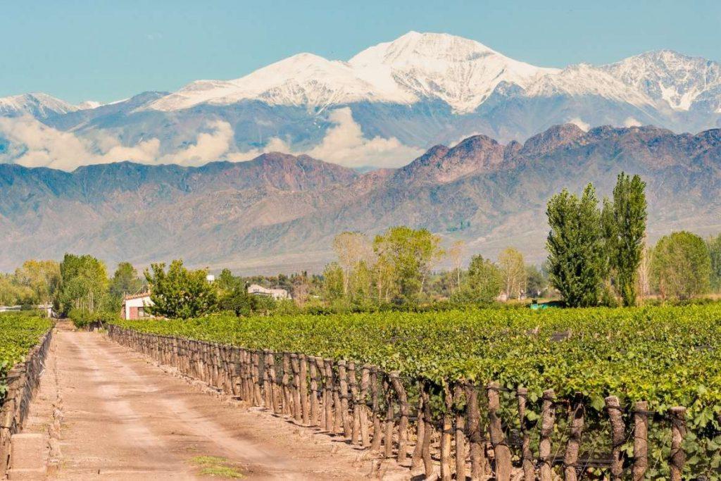 bela paisagem na vinícola de Mendoza tendo os vinhedos na frente e as montanhas nevadas ao fundo um dos melhores destinos de vinho do mundo