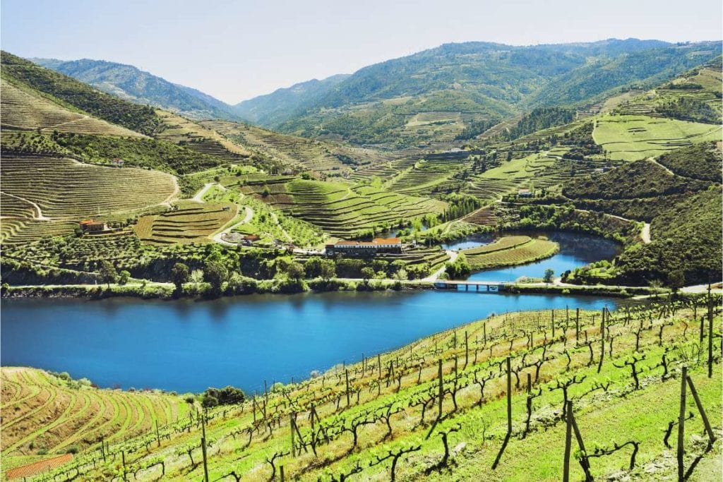 Douro valley view with the Douro river in the middle of the vineyards