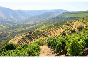 vinhedos no Vale do Douro, vista durante um tour de vinhos na região do Douro