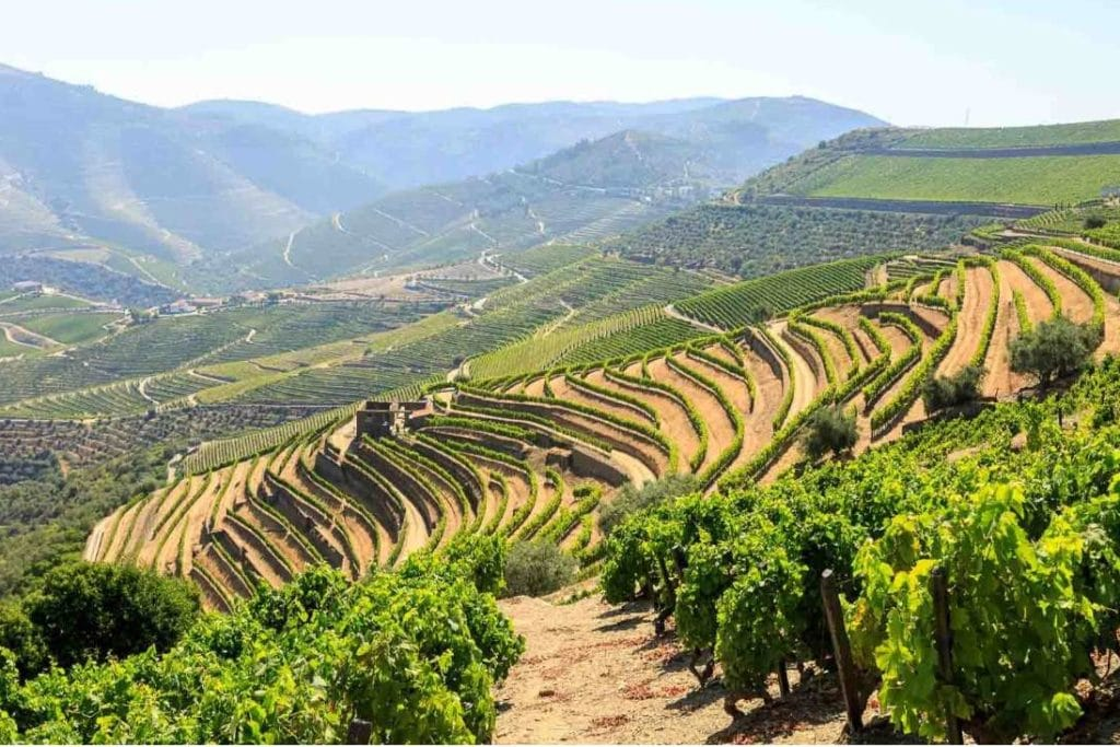 vineyards at Douro Valley, view during a wine tour in Douro region