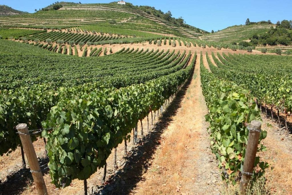 wineyard in Douro valley during a stop in a wine tour in Douro region