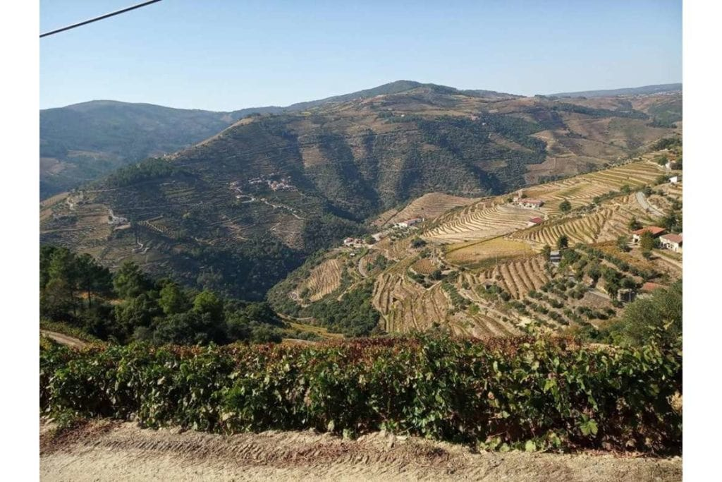 panoramic view of the vineyards from a wine tour in Douro Valley