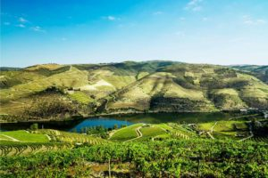 vista panorâmica do vale do Douro com o rio Douro no meio da vinha, durante um passeio de vinhos na região do Douro
