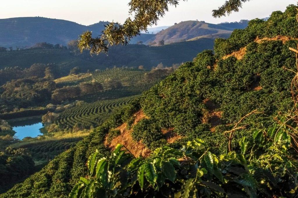 Plantação de Café na Rota do Café em Minas Gerais