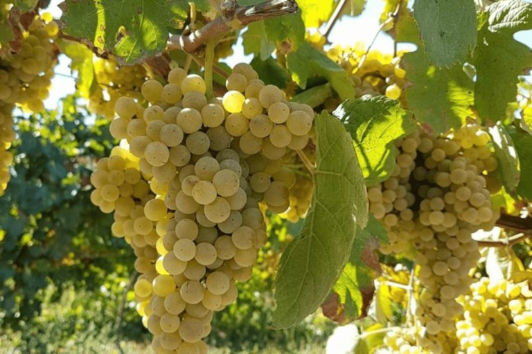 Green Wine Region Tour with Wine Tastings and Lunch