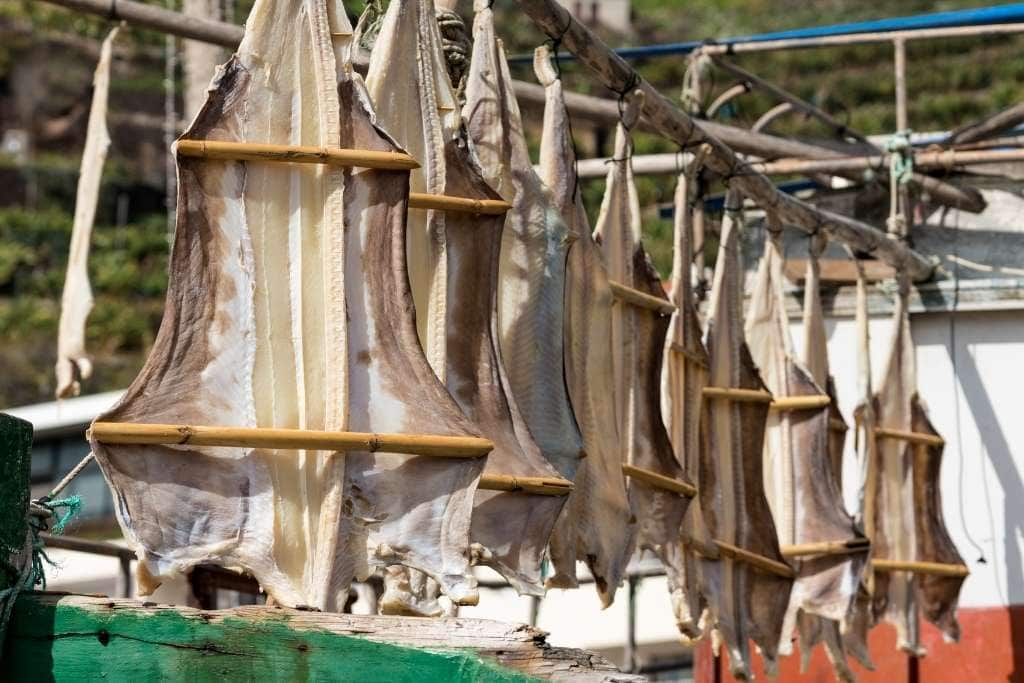 some codfish being air-dried before the salting process