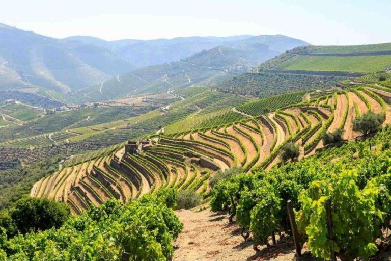 Tour Privado no Vale do Douro com 2 Vinícolas e Cruzeiro Opcional