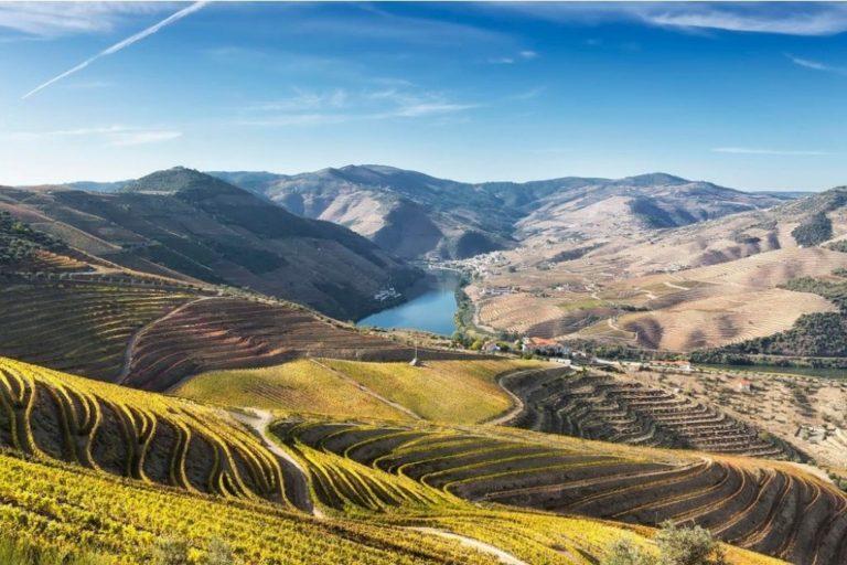 Tour no Vale do Douro com 3 Vinícolas e Almoço